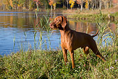 DOG 06 LS0114 01