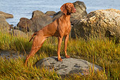 DOG 06 LS0115 01