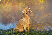 DOG 06 LS0118 01
