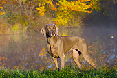 DOG 06 LS0119 01