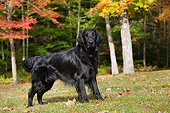 DOG 06 LS0127 01