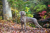 DOG 06 LS0128 01