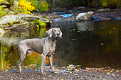 DOG 06 LS0129 01
