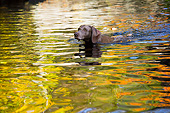 DOG 06 LS0130 01