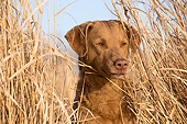 DOG 06 LS0134 01