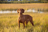 DOG 06 LS0145 01