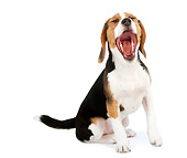 DOG 06 MR0003 01