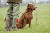 DOG 06 NR0031 01