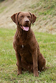 DOG 06 NR0032 01