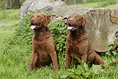 DOG 06 NR0036 01