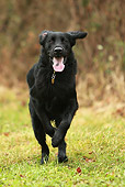 DOG 06 NR0037 01