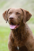 DOG 06 NR0040 01