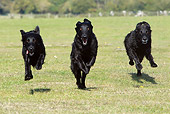 DOG 06 NR0042 01