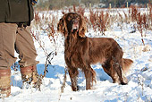 DOG 06 NR0047 01