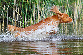 DOG 06 NR0048 01