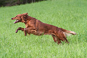 DOG 06 NR0050 01