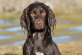 DOG 06 NR0053 01