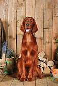 DOG 06 NR0062 01