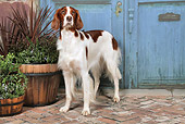 DOG 06 NR0065 01