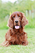DOG 06 NR0076 01