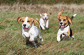DOG 06 NR0083 01