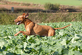 DOG 06 NR0086 01