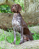 DOG 06 NR0087 01