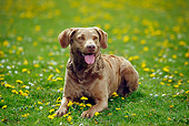 DOG 06 PE0005 01