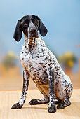 DOG 06 PE0009 01