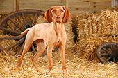 DOG 06 PE0030 01