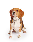 DOG 06 RK0002 02