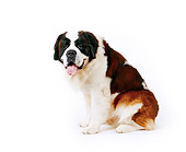 DOG 06 RK0033 01