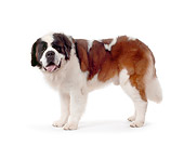 DOG 06 RK0033 02