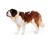 DOG 06 RK0035 01