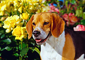 DOG 06 RK0155 04