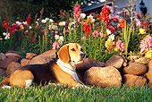DOG 06 RK0165 02
