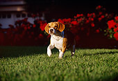 DOG 06 RK0177 01