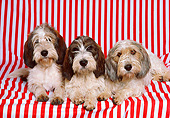 DOG 06 RK0191 17