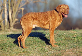 DOG 06 SS0007 01
