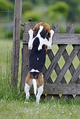 DOG 06 SS0021 01