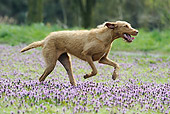 DOG 06 SS0024 01