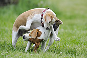 DOG 06 SS0030 01