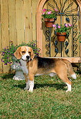 DOG 06 CE0004 01