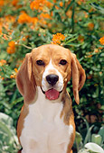 DOG 06 CE0008 01
