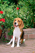 DOG 06 CE0010 01