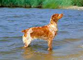 DOG 06 CE0023 01