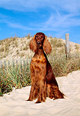 DOG 06 CE0027 01
