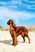 DOG 06 CE0028 01