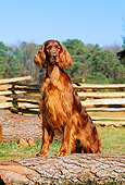 DOG 06 CE0029 01