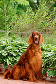 DOG 06 CE0030 01